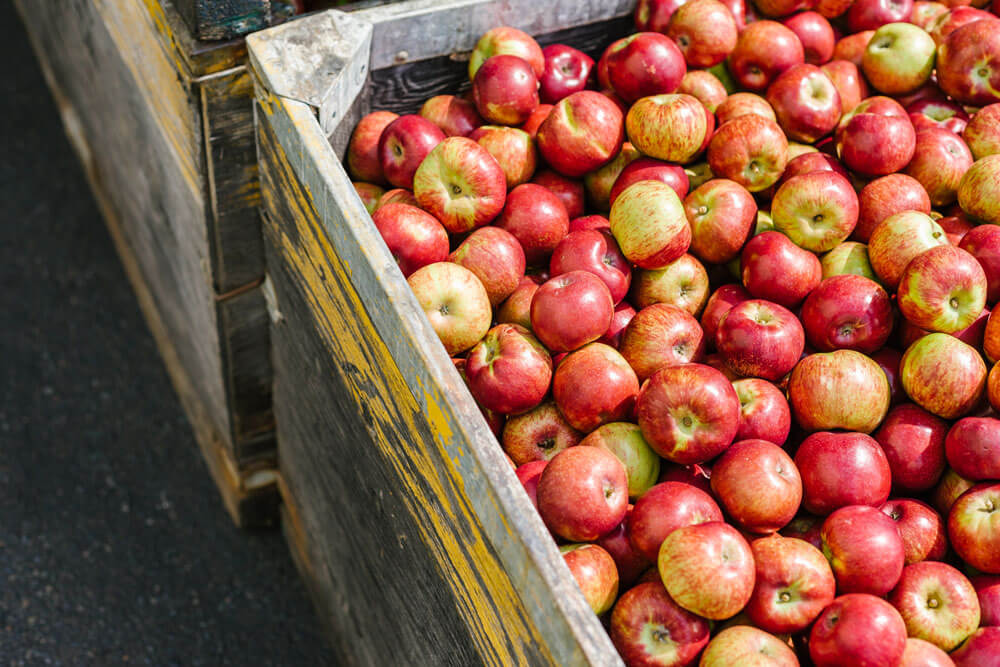Thistle health, Greene Hemly Orchards, Apples